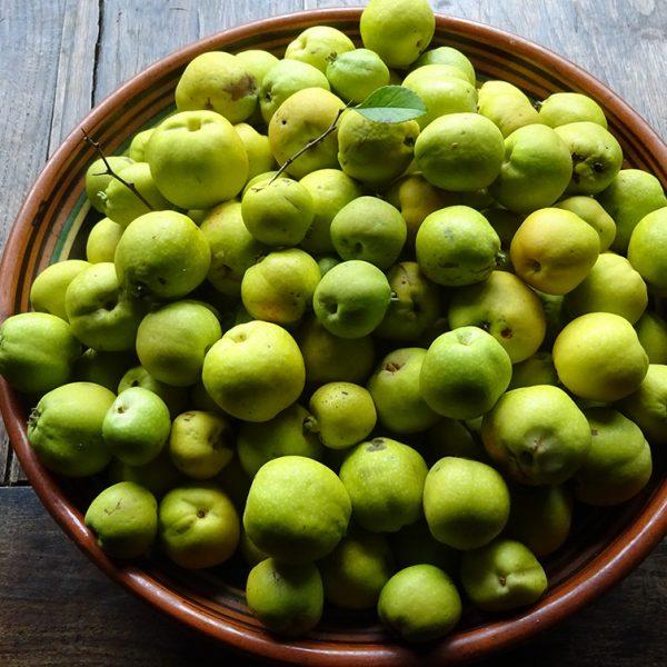 Cierpkie jabłuszka