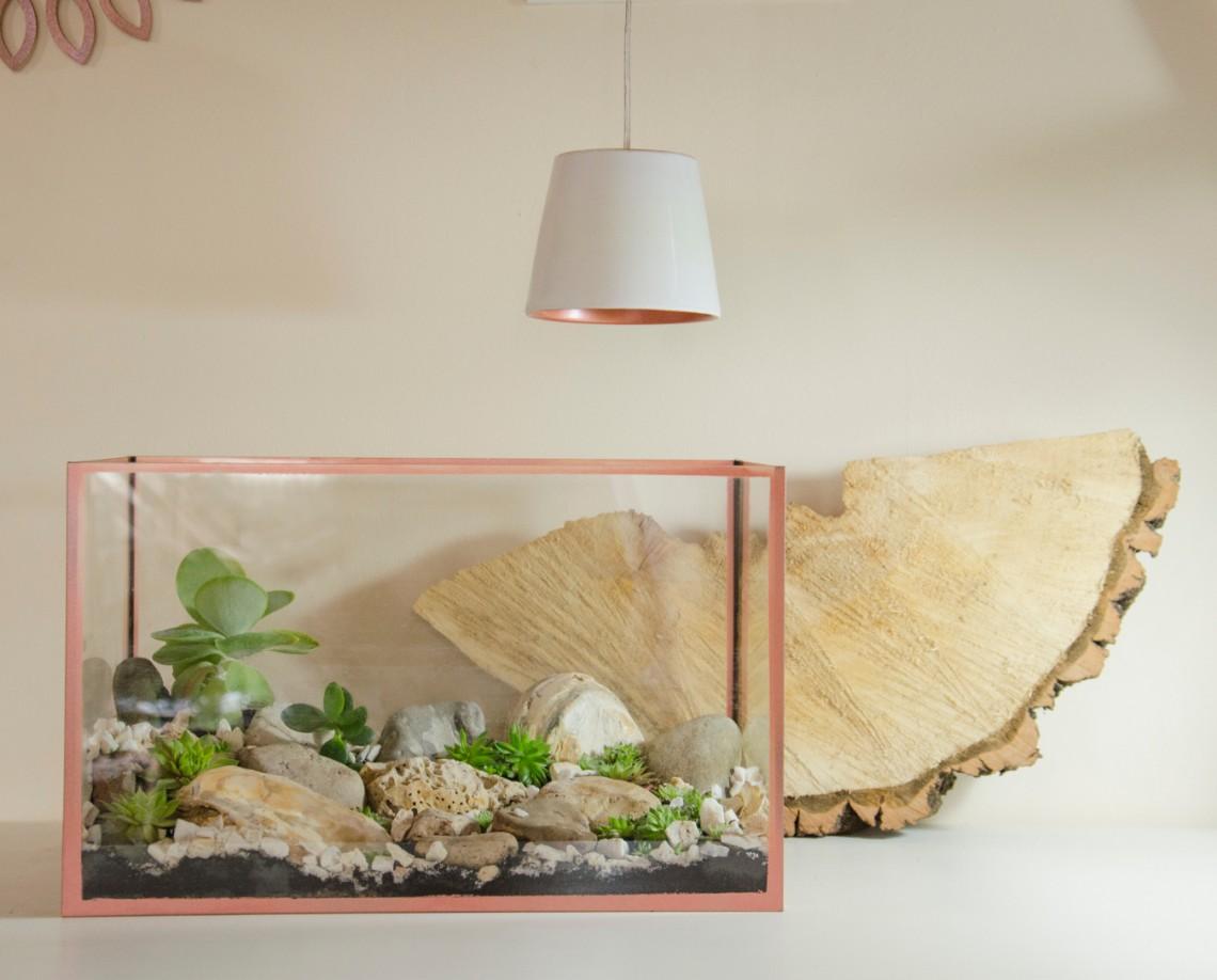 Skalniak w akwarium