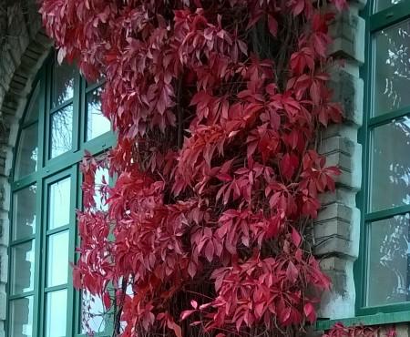 Jesienna impresja