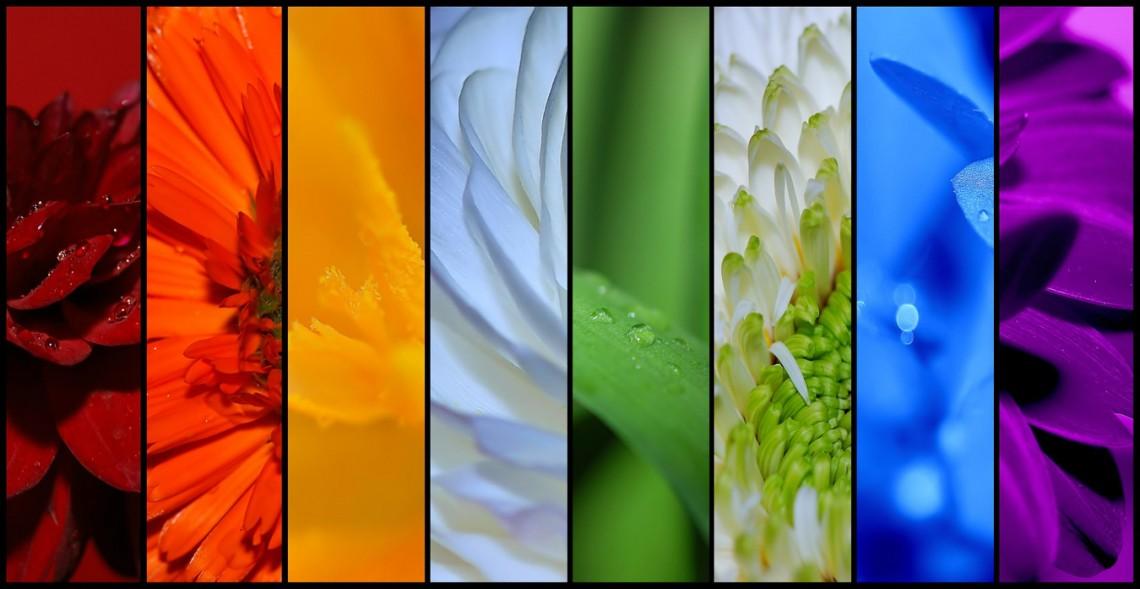 Quiz kwiatowy