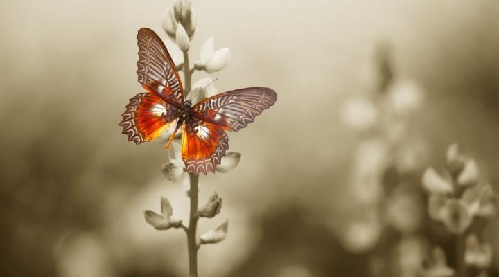 Z kwiatka na kwiatek