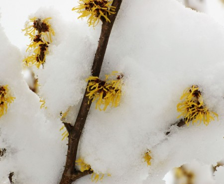 Kwiaty zimy