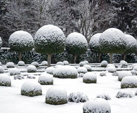 Zimą zielone