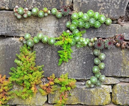 Jaki mur do ogrodu
