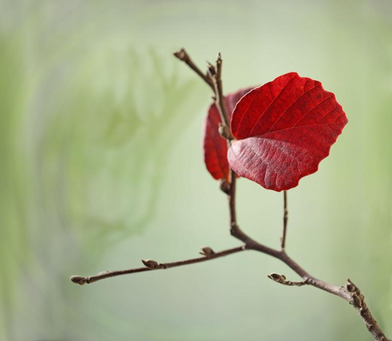 Jesienne przebarwienie liści