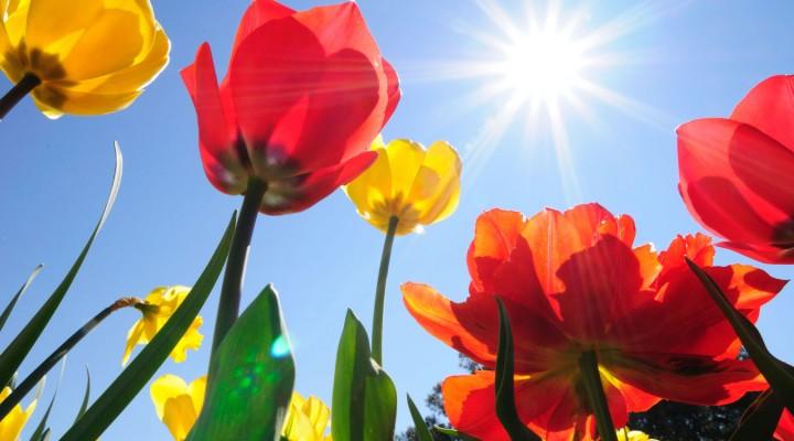 Rośliny cebulowe – podziwiamy, komponujemy, sadzimy