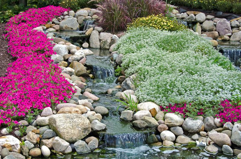 Różowe i białe poduchy kwiatów kontrastują z jasnymi kamieniami wzdłuż strumienia.