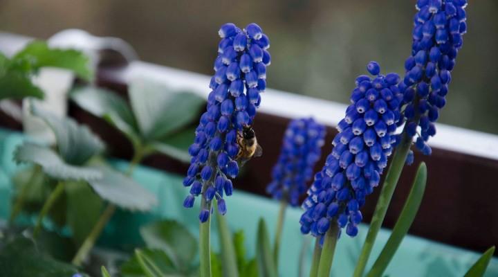 Kwiecień – czas sadzenia
