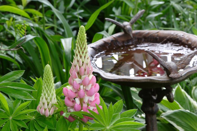 Płaskie poidełko na wysokiej nożce – musi wystawać ponad rośliny na rabacie, żeby przywabiło ptaki.