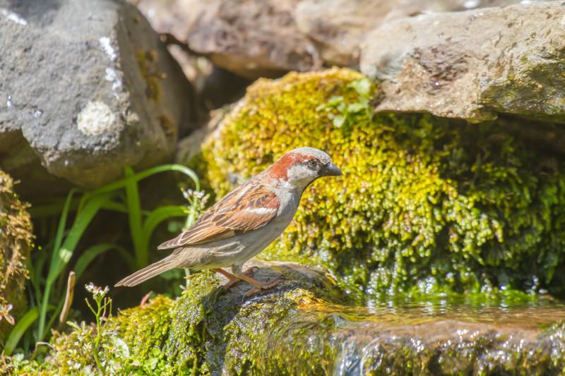Płytki kamień przyciągnie ptaki, jeśli woda będzie się po nim sączyła powoli .