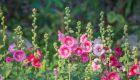 Leśny azyl – Artur Barciś i jego ogród