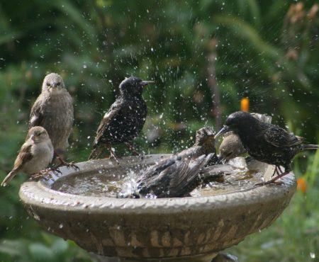 Ptaszki czyste jak łza