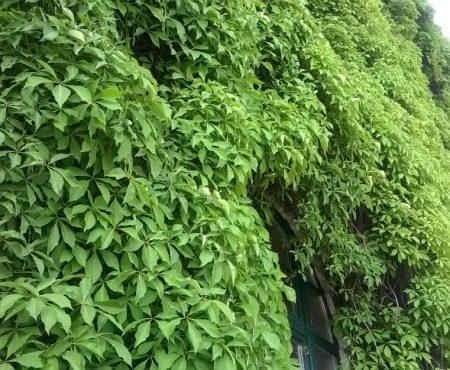 W zielonym kożuchu z liści