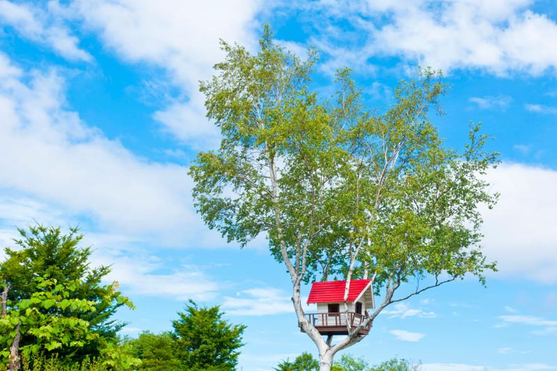 Czerwony daszek w koronie brzozy wygląda bardzo efektownie, goście nie będą go długo szukali..