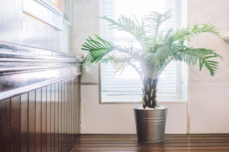PIelęgnacja roślin doniczkowych.