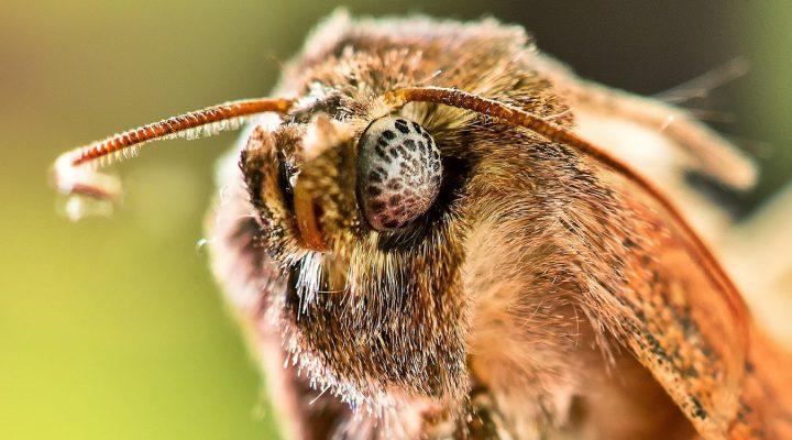 Quiz z owadami