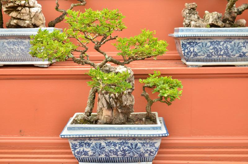 Typowy pojemnik do uprawy bonsai –Chiny.