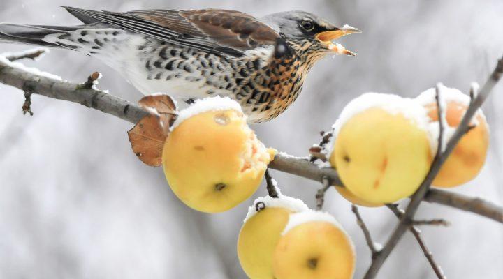 Quiz z ptakami