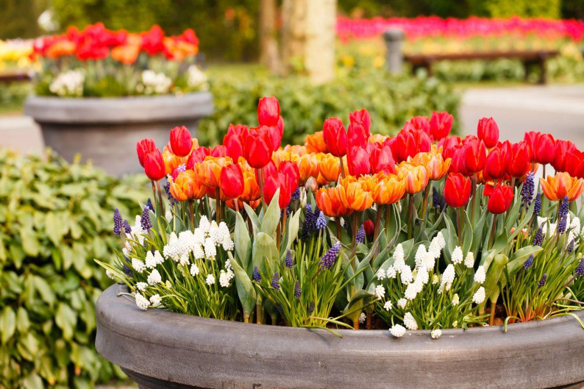 Wiosna w donicy