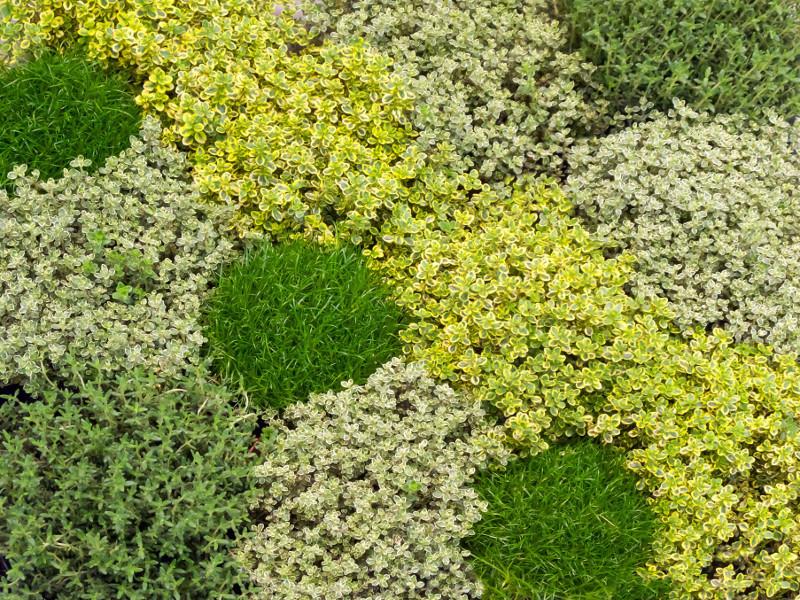 Miejsce na zio a lovely garden - Plante couvre sol sans entretien ...