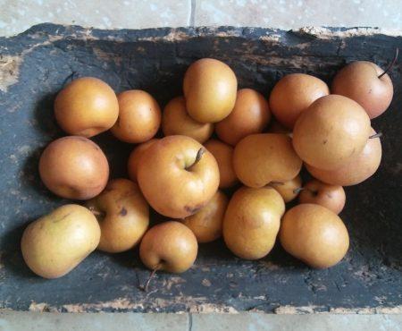 Brusznice z gruszkami chojuro
