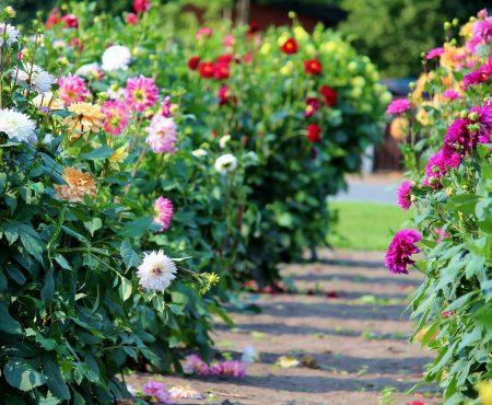Kwiaty krótkiego dnia