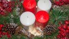 Miesiącznica roczna (Lunaria annua)