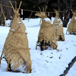 Zimowe ubranka dla roślin