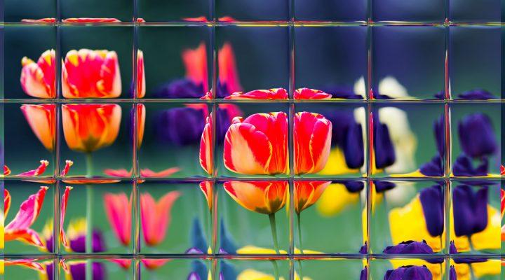 Lustro w ogrodzie