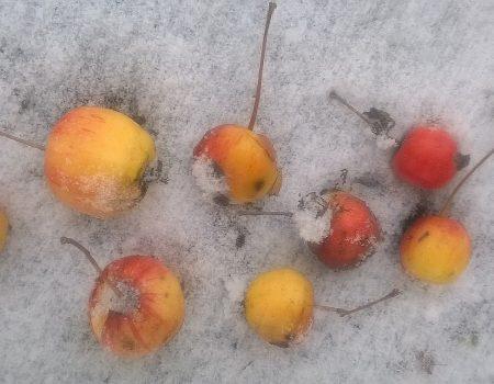 Zimowe jabłuszka