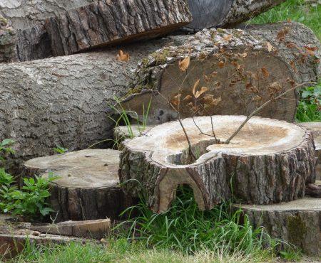 Legalna wycinka drzew i krzewów – zmiany w przepisach