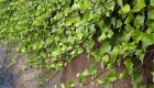 Quiz – rozpoznaj 10 kolczastych roślin