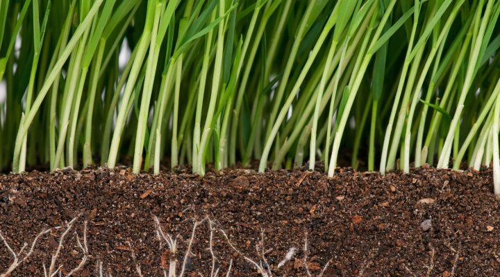Trawnik – zakładanie