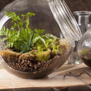 Szklane mini ogródki