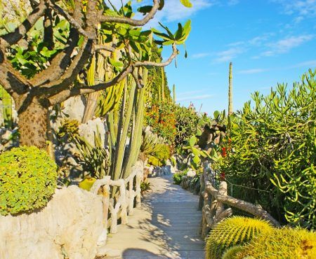 Ogród Egzotyczny w Monako