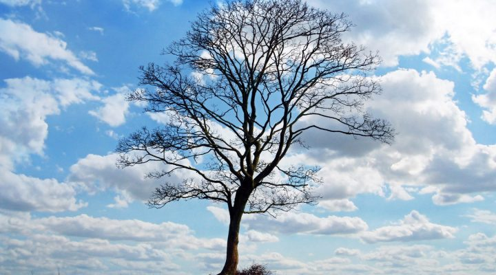 W obronie drzew