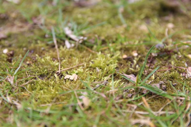 Mech na zaniedbanym trawniku