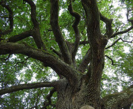 Konkurs Drzewo Roku 2017, 16 drzew w finale