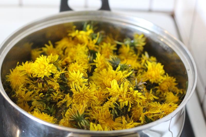 syrop z kwiatów mniszka lekarskiego