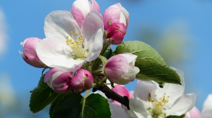 Quiz – rośliny z bajek i baśni