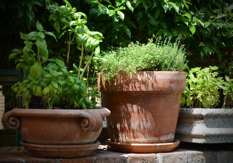 zioła na balkonie i tarasie