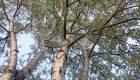 Agrowłóknina na chwasty – czy to skuteczny sposób?