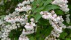Quiz – rośliny balkonowe
