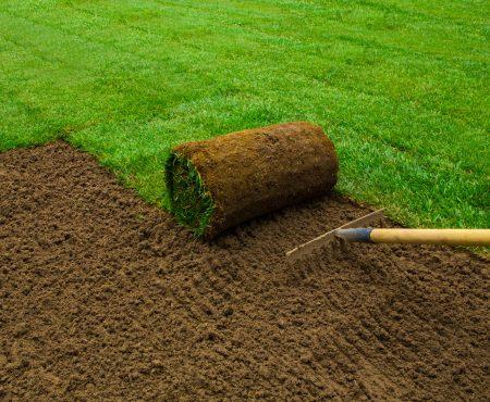 Pielęgnacja trawnika po zimie - jak robić to dobrze?