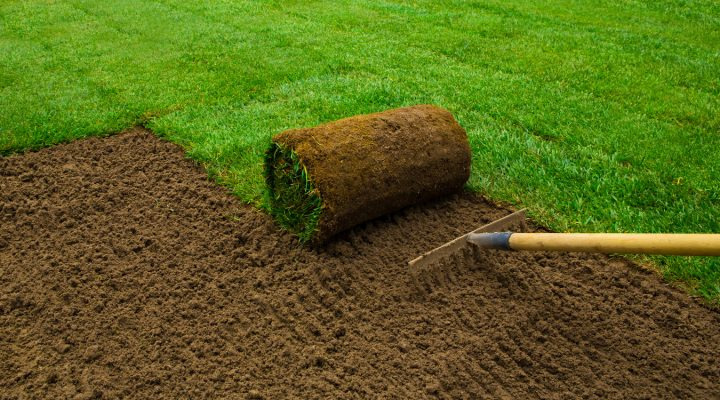 Pielęgnacja trawnika po zimie – jak robić to dobrze?
