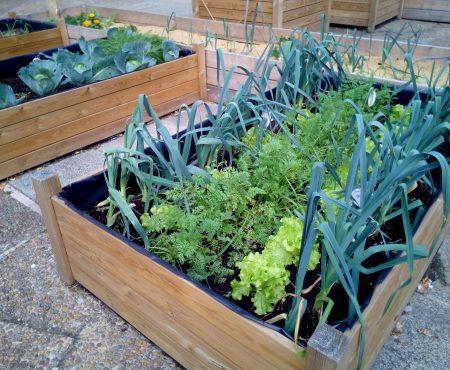 Warzywa w pojemnikach, sposób uprawy