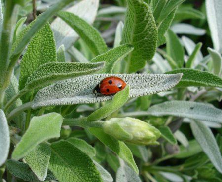 Ogródek ziołowo-bylinowy – projekt
