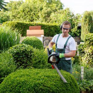 Zostań stylistą w swoim ogrodzie, czyli jak formować rośliny