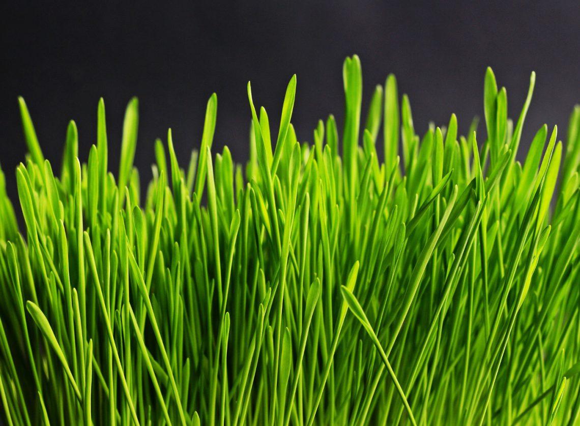 obrzeża trawnikowe