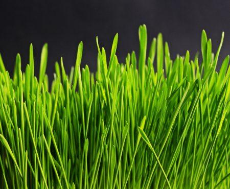 Obrzeża ogrodowe – co to za rozwiązanie i dlaczego warto je wybrać?
